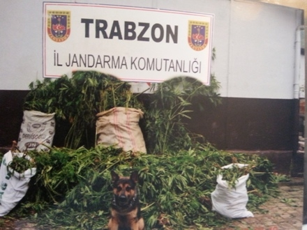 Trabzon'da esrar ormanı